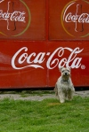 Where are my Coke royalties?
