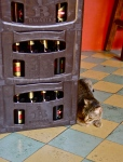 all that beer, for one small kitty?