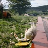 Food Friday: Lunchtime in Boyacá
