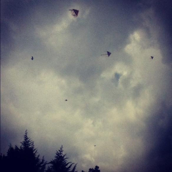 kites everywhere
